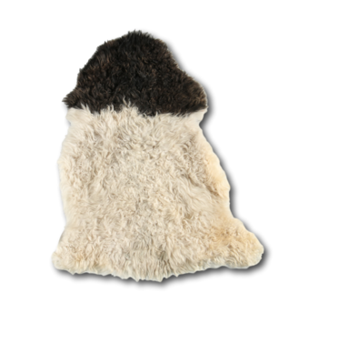 Curly Sheepskin Longhair Black Heads